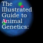 Animal Genetics pt.2